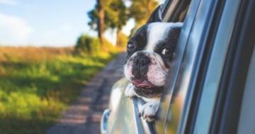 Erbrechen Autofahren Hund