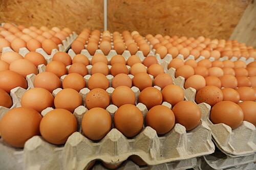 Brutmaschine Brutapparat Hühnereier ausbrüten