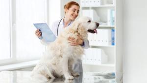 Unvertraeglichkeiten-bei-Hunden-Tierarztbesuch-