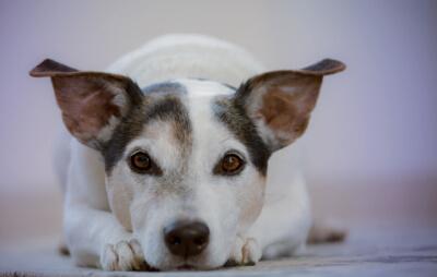 Futtermittelunverträglichkeit bei Hunden