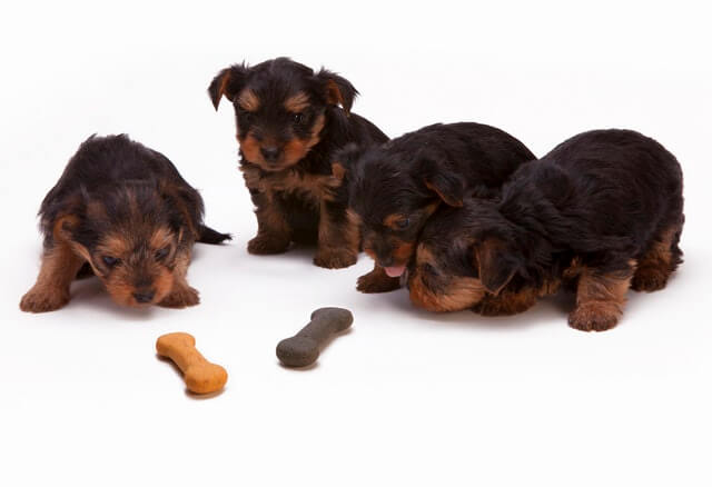 Hundeleckerlies