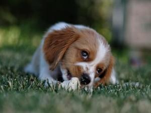 Hund frisst nicht was tun