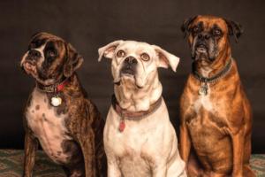 Junger und alter Hund