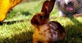 Kaninchenstall Standort