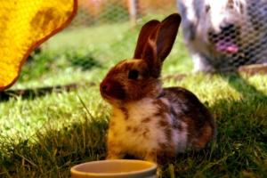 Das beste Holz für den Kaninchenstall