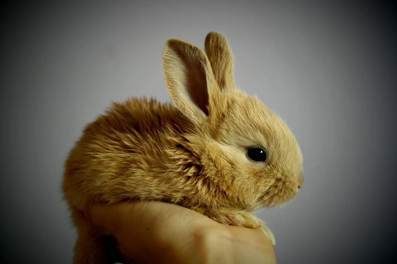 Eigenschaften und Materialien: Worauf Sie bei Kaninchenställen achten sollten