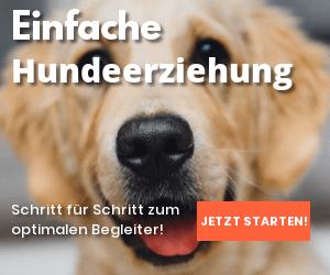 Einfache Hundeerziehung